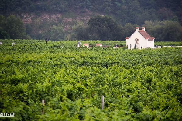 vineyards in austria's wachau valley