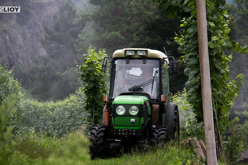 wachau valley vineyards on the danube in austria