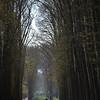 versailles garden arbor walkway