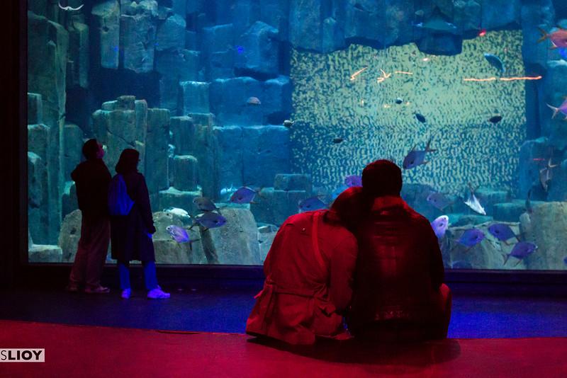 couple at the aquarium de paris