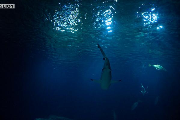 shark tank at cineaqua paris