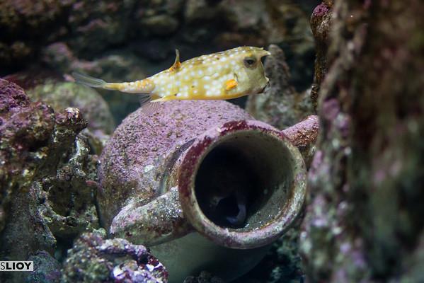 fish at the cineaqua paris