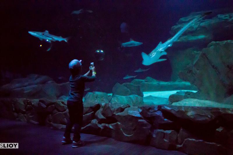 sharks in the aquarium de paris