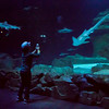 sharks in the aquarium de paris