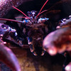 aquarium paris lobster