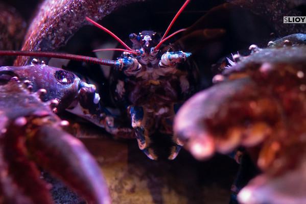 aquarium paris lobster