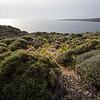 Vegetation above a bay on the Crete E4 Trail in Greece.