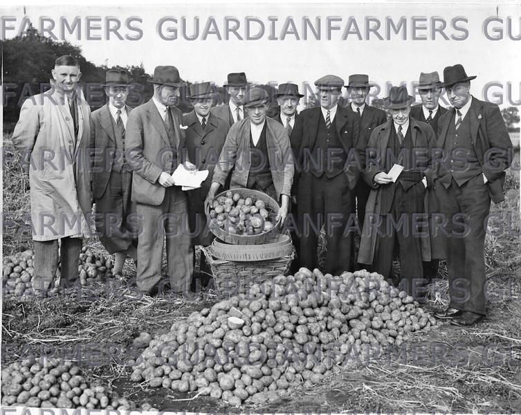 Hutton Potato trials.