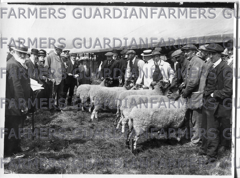 1913-Lonk sheep line-up at Royal Lancashire Show, pens at rear of judging line-up.