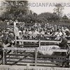 Mr W. A. Stewart (seated on fence) who judged the pigs .  Stock judging, Hutton May 27th 1939