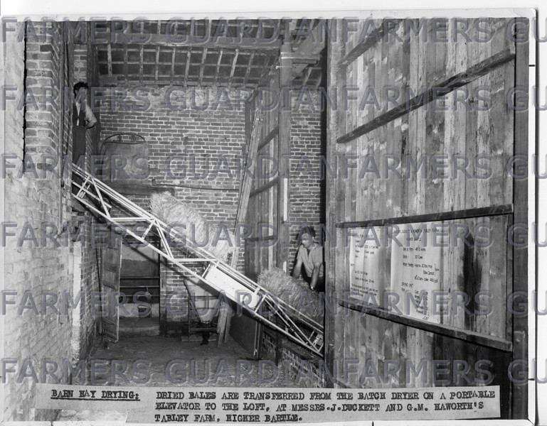 May 1964-Dried bales are transferred from the batch dryer on a portable elevator to the loft, at Messrs J.Duckett and G.M. Haworth's Tabley farm, Higher Bartle.