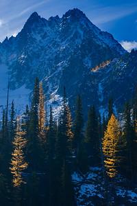 Golden larches, Enchantment Wilderness, Washington