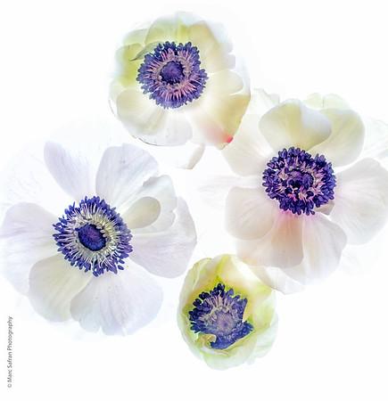 Illuminated Flowers