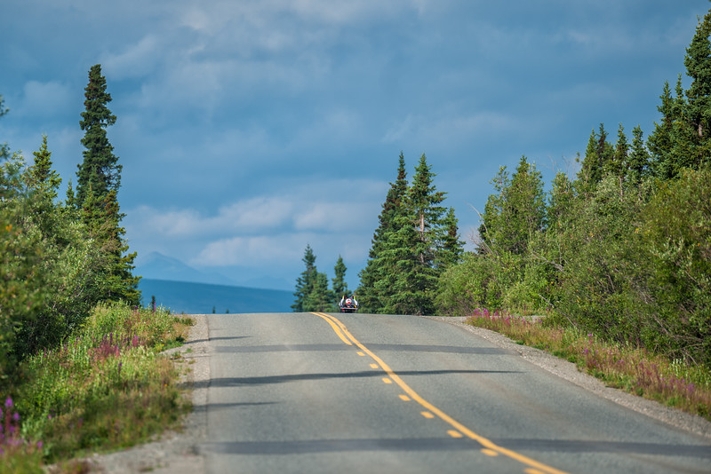 July 25, 2015: A racer races along Denali Park Road during stage five of the 2015 Alaska Challenge handcycle race.