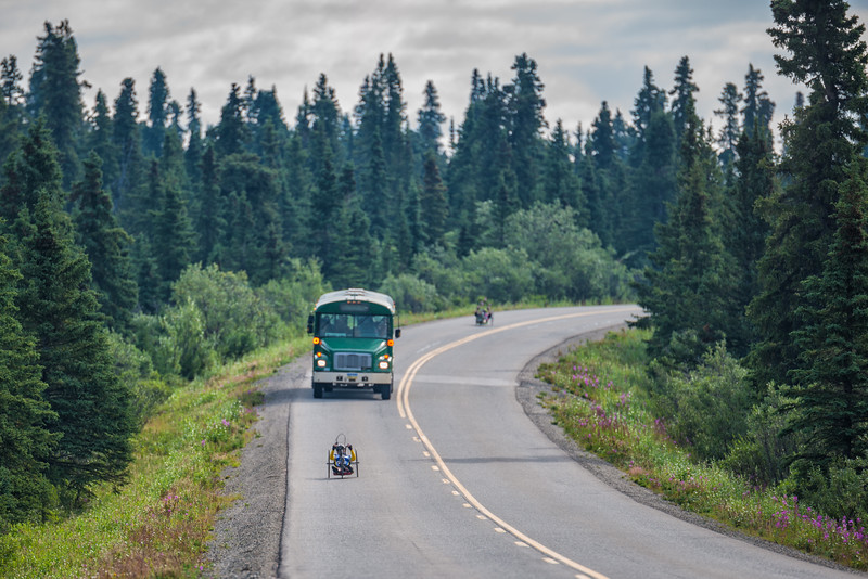 July 25, 2015: A pair of racers share the Denali Park Road with a Park Service bus during stage five of the 2015 Alaska Challenge handcycle race.
