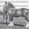 Royal Lancs at Blackpool  1949. J & W Whewell's Althorpe Trump Card !947-8 Shire champion.