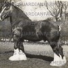 R B Thompson's stud, Mythop.   Edingale Whats Wanted.  1944
