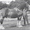 T. Marsden and Sons' Globe Warrant,  Leyland Show 1950 champion gelding