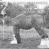 1938 Pilling show  Bathy Naomi reserve champion