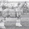 J. Briggs' stud  1947  Crimwell Blue Boy