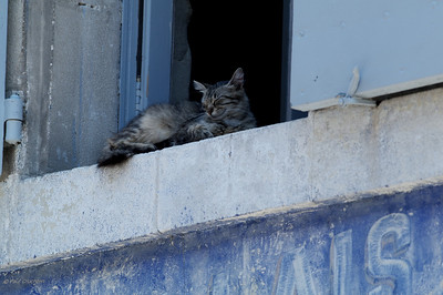 a lazy cat in Lourmarin. This cat has been adorning the same spot over the whole week we spent down there