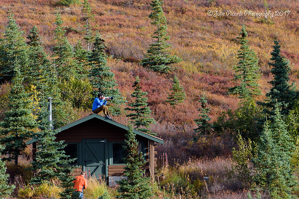 Perfect vantage  point for photographing the bull moose