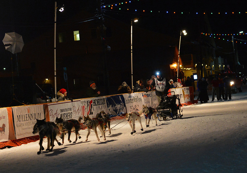 Dallas Seavey, son of 2013 Iditarod champion Mitch Seavey, brings his team down the finishing chute in downtown Nome. Seavey finished the 2013 race in fourth place after claiming the title in 2012.