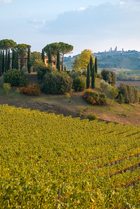Landscape with Vineyard and Farmhouse Lodge near San Gimignano in Tuscany (Toscana), Italy