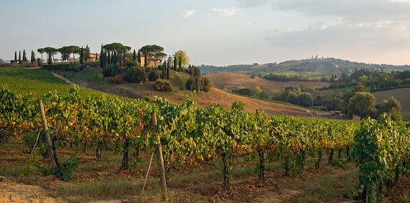 Vineyard and Farm, San Gimignano, Tuscany
