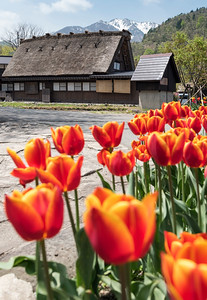 Ogimachi Village, Shirakawa