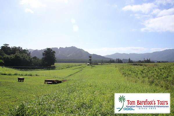 Just Live Kauai, Treetop Adventure (Printable)