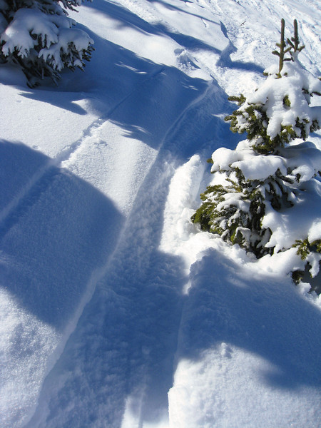 Fresh tracks in the North Bowl.