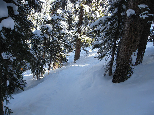 Glades in the North Bowl.