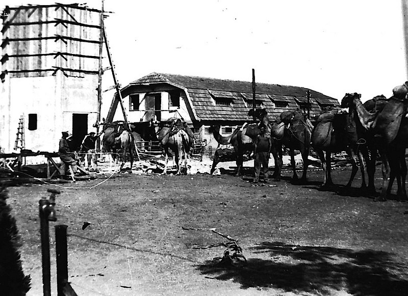 Camels Bringing Sand for Building of the Water Tower