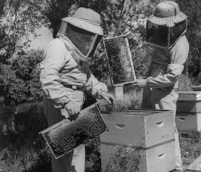Bee-Keepers at Work
