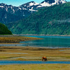 Salmon fishing in Glacier Bay