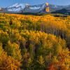 Autumn aspens on Kebler Pass, Colorado