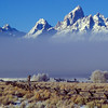 Tetons above the fog