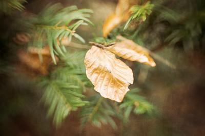 20180131 - Lensbaby Leaf