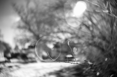20170120 The Branch in the Bubble