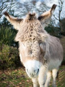 20170113 Donkey with a Twist