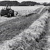 June 1982- Grass swathes are turned up for the baler at J.E. Walton and Sons, Fox Lane Ends Farm, Wrea Green, Kirkham. 72 acres of hay made from first cut, the second cut is going into bagged silage in one of the best reasons for many many years.