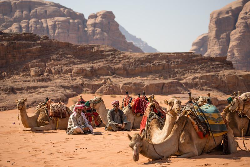 A caravan of camels at rest in the desert of Wadi Rum, Jordan.