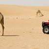 Racing or Ranching? Deserts of Dubai.