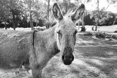 20190824 - Furzley Road Donkey