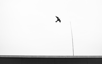 20190417 - Bird on a Wire
