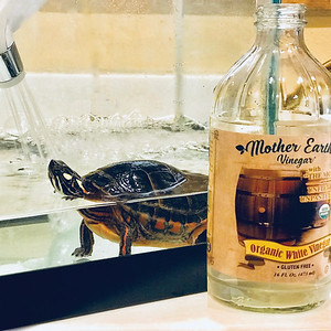 MEV Turtle tank cleaning