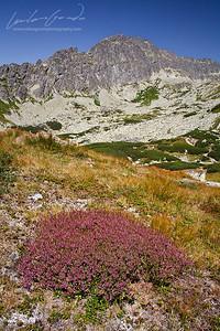 furkotska dolina, vysoke tatry mountain range, slovakia