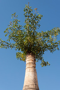 Tree overgrowing a stupa at Shwe Inn Thein Pagoda, Inthein (Indein), near Inle Lake, Burma (Myanmar)