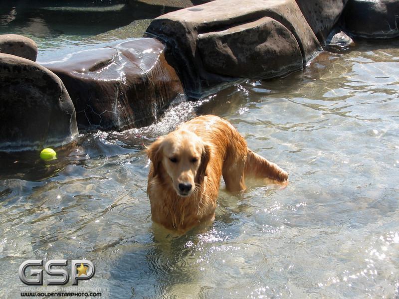 Golden Swim Party 013